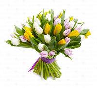 Тюльпаны (микс)