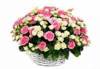 "Корзина из роз ""Моя прекрасная леди"""