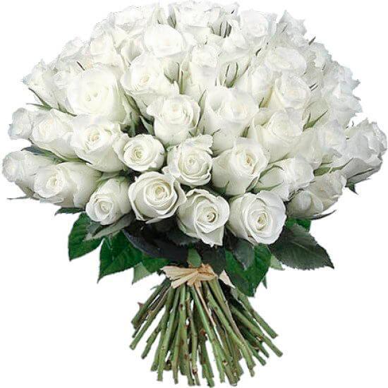 Картинки по запросу белые розы картинки
